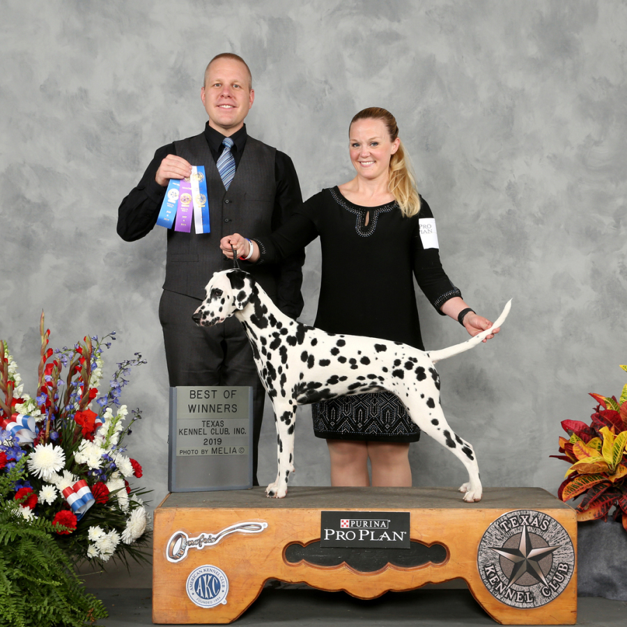 Padme' Nifty Nine Litter with Baker Family in Texas, Winning First show at 6months