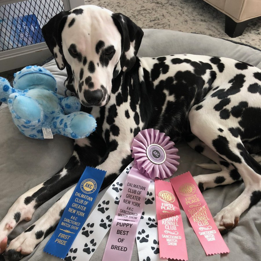 Baymax Electric Eleven Litter winning First show with Esposito Family